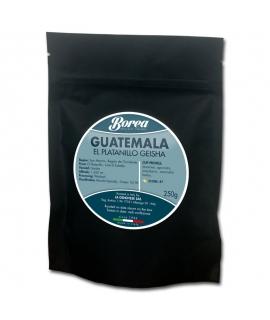 Guatemala El Platanillo Geisha